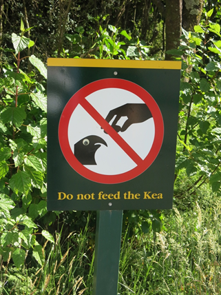 do not feed the kea birds